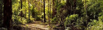 walk-trail